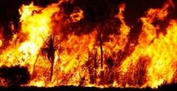australia_bushfire_loss_of_wildlife_sangbad