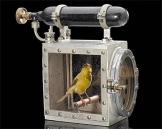 Canary-In-A-Coal-Mine