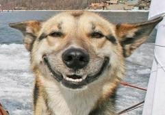 smiling-dog-2