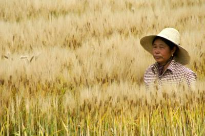 chinese-rice-farmer-michele-burgess