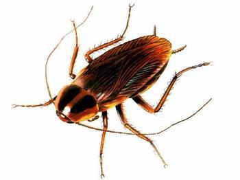 cockroach_3_xlarge