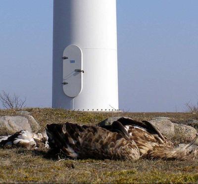 dead_eagle_at_base_of_turbine