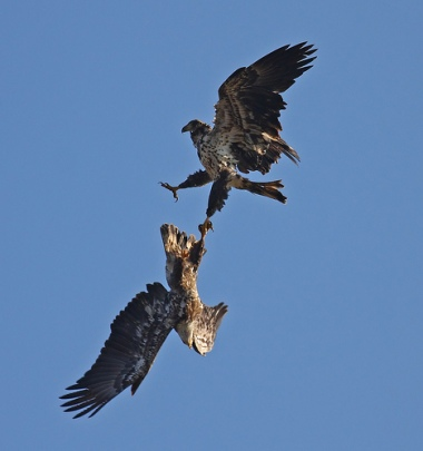 eagle death spiral