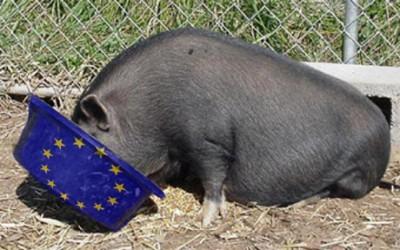 pig-trough-ey