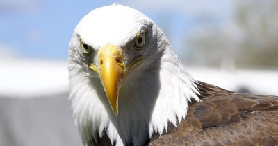 eagle robert bryce