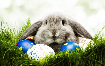 Easter-Bunny-Wallpapers-HD