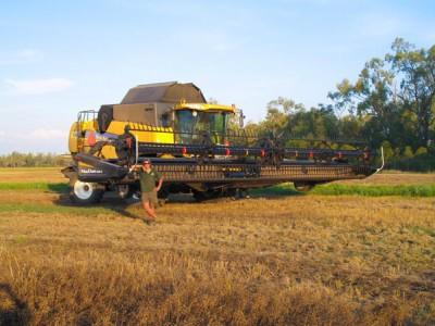 grain_harvesting_06