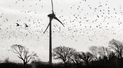 Birds-Turbines-15-460x256
