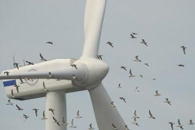 turbines-birds