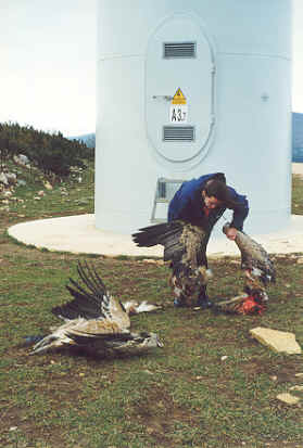griffon-vultures-navarre-spain.jpeg?w=279