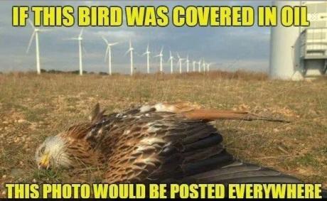 bird oil meme