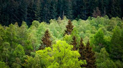 forest-scotland.jpg?w=584